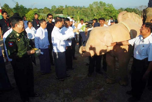 white-elephan-capture-in-Arakan-state-Burma