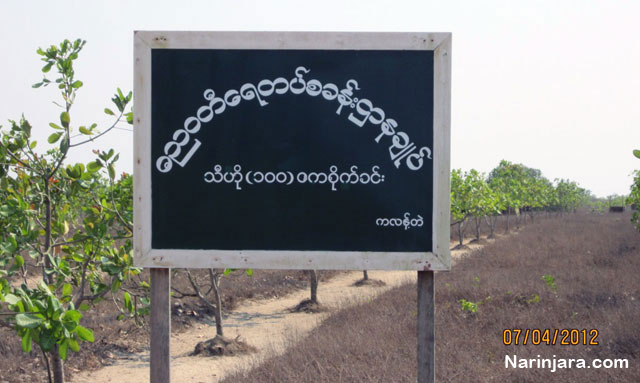 The lands owned by Arakanese farmers were confiscated by Burma Navy for a orchard. ( Photo by Narinjara)